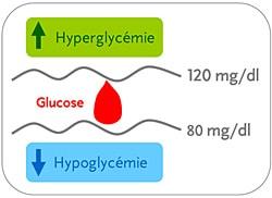 Équilibre glycémique