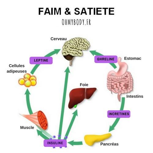 Les hormones de la satiété la leptine